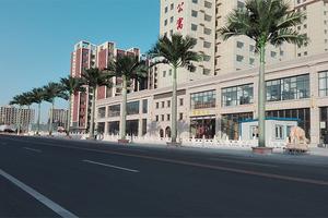 街道装饰大王椰树