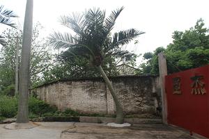 造型椰子树