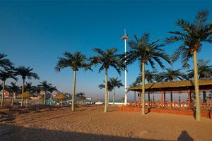 海边沙滩仿真椰子树