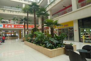 超市装饰仿真棕榈树