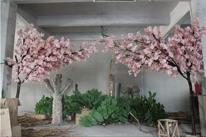 半边真杆樱花树