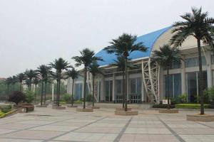 郑州西亚斯国际学院装饰椰子树