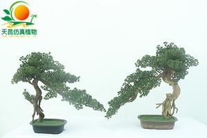 PVC材质松柏树