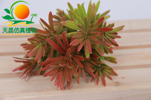 室外阻燃墙上小植物001-3
