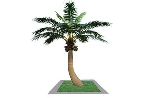 弯杆椰子树