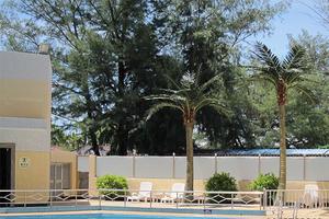 游泳池装饰椰子树