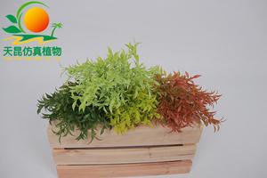 室外阻燃墙上小植物002-1