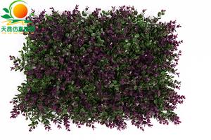 金钱叶草皮紫2