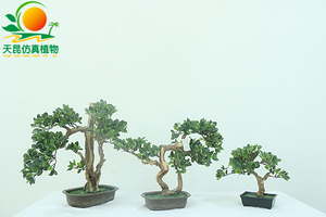 散叶精品绿植