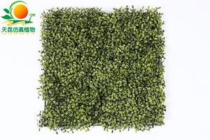 米兰叶草皮绿1