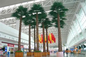 车站装饰棕榈树