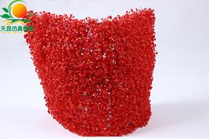 米兰草皮红1