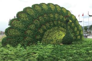 孔雀造型仿真绿雕