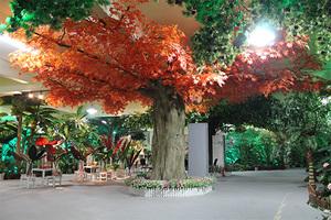 包柱红枫树