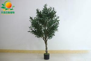 橄榄树盆栽