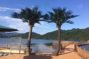 仿真椰子树组合