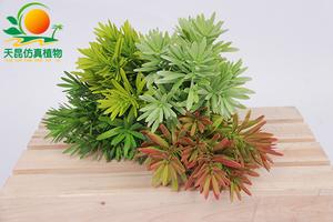 室外阻燃墙上小植物001—14